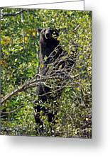 Standing Black Bear Greeting Card