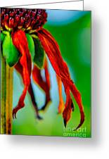Standing Bright Greeting Card