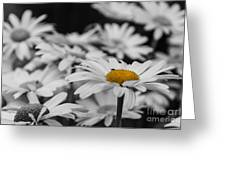 Standing Out From The Crowd 1 Greeting Card