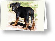 Standing Puppy Greeting Card