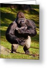 Standing Silverback Gorilla Greeting Card