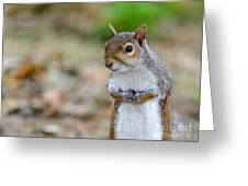 Standing Squirrel Greeting Card