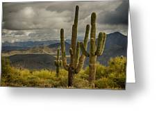 Standing Tall In The Sonoran Desert  Greeting Card