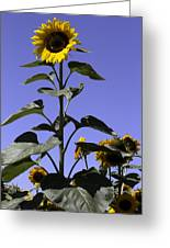 Standing Tall Greeting Card by John Holloway