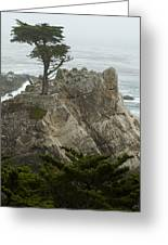 Standing Tall On The Rock Greeting Card