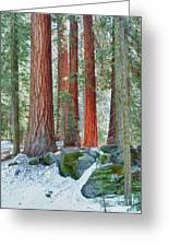 Standing Tall - Sequoia National Park Greeting Card