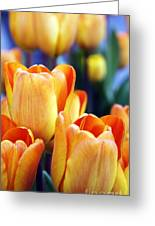 Standing Tall Tulips Greeting Card