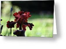 Standout Stand Tall Stand Proud Greeting Card
