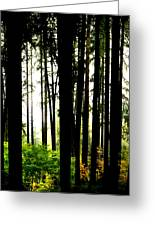 Stanley Park Triptych Right Greeting Card