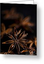 Star Anise Study Greeting Card