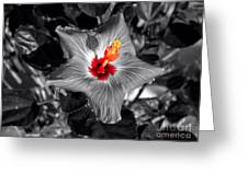 Star Bright Hibiscus Selective Coloring Digital Art Greeting Card