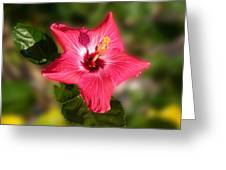 Star Bright Hibiscus Greeting Card
