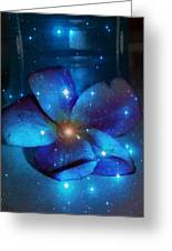 Star Light Plumeria Greeting Card