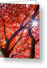 Star Light Thru Maple Greeting Card