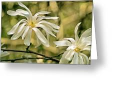 Star Magnolia   Greeting Card