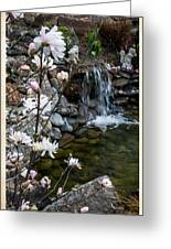 Star Magnolia And Flowing Water Greeting Card