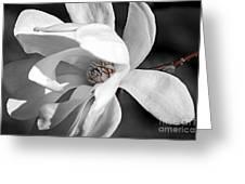 Star Magnolia Flower Greeting Card