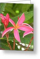 Starburst Plumeria Greeting Card