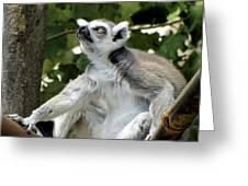 Lemur Stare Greeting Card