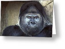 Stare-down - Gorilla Style Greeting Card