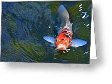 Stare Down With A Koi Greeting Card