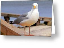 Stare Of A Seagull Greeting Card