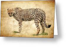 Stare Of The Cheetah Greeting Card
