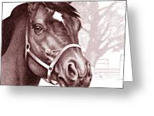 Stare Of The Stallion Greeting Card by Patricia Howitt