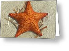 Starfish 1 Of Bottom Harbour Sound Greeting Card