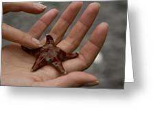 Starfish 1 Greeting Card