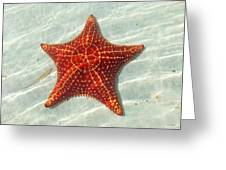 Starfish 3 Of Bottom Harbour Sound Greeting Card
