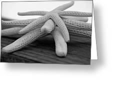 Starfish 3235 Bw Greeting Card