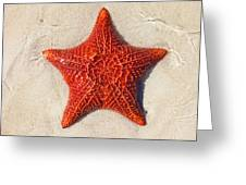 Starfish 4 Of Bottom Harbour Sound Greeting Card