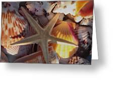 Starfish And Sun Rays Greeting Card