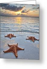 Starfish Beach Sunset Greeting Card