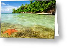 Starfish In Clear Water Greeting Card