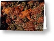 Starfish Low Tide Cape Sebastian Oregon Coast Greeting Card