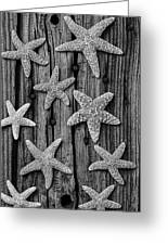 Starfish On Old Wood Black And White Greeting Card