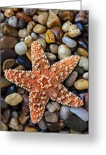 Starfish On Rocks Greeting Card