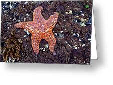 Starfish - Oregon Coastline Greeting Card