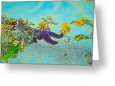 Starfish Paradise Greeting Card