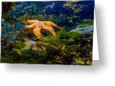 Starfish Greeting Card