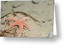 Starfish Underwater Greeting Card