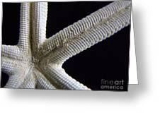 Starfish Underworld Greeting Card