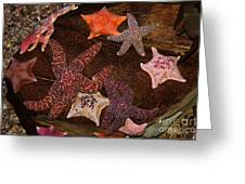 Starfish Variety 5d24133 Greeting Card