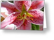Stargazer Lily Greeting Card