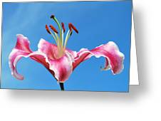 Stargazer Lily Series 1 Of 4 Greeting Card
