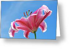 Stargazer Lily Series 3 Of 4 Greeting Card