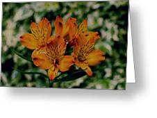 Stargazers Greeting Card