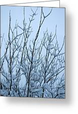 Stark Beauty - Snow On Branches Greeting Card